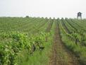 Стара фамилна винарска изба и разработен бизнес на 13 км от Видин