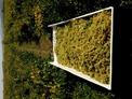 Производство и продажба на винени сортове грозде