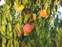 Плододаваща овощна градина!